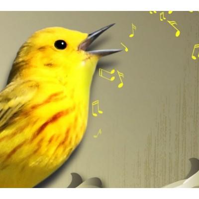 Cuadro impreso 5 piezas 200x100 Yellow Bird