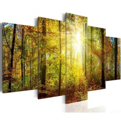 Cuadro impreso 5 piezas 200x100 Floresta y Sol